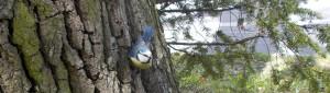 BirdyHealth